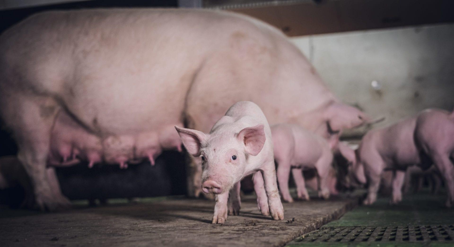 granja que apuesta por el bienestar animal Rodríguez Sacristán